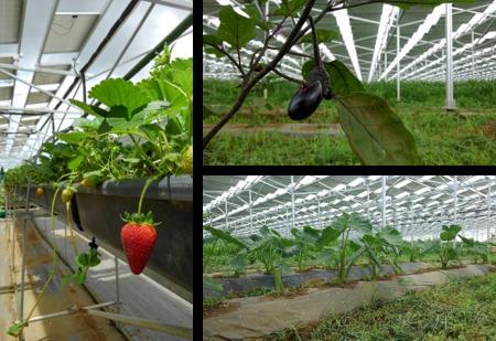 営農と太陽光発電事業を両立するためのノウハウを提供 juwi自然電力オペレーションと千葉エコ・エネルギーが共同で新サービスを開始 ~営農型太陽光発電に世界基準のO&Mを~
