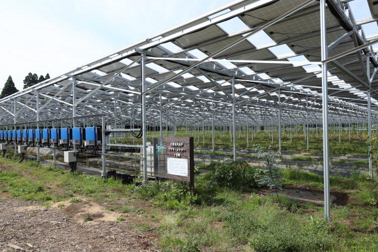 ソーラーシェアリング特化型O&Mサービスを千葉県で開始 ~これからを見据えた遠隔監視型O&Mにより、第1号事例が安定稼働中~