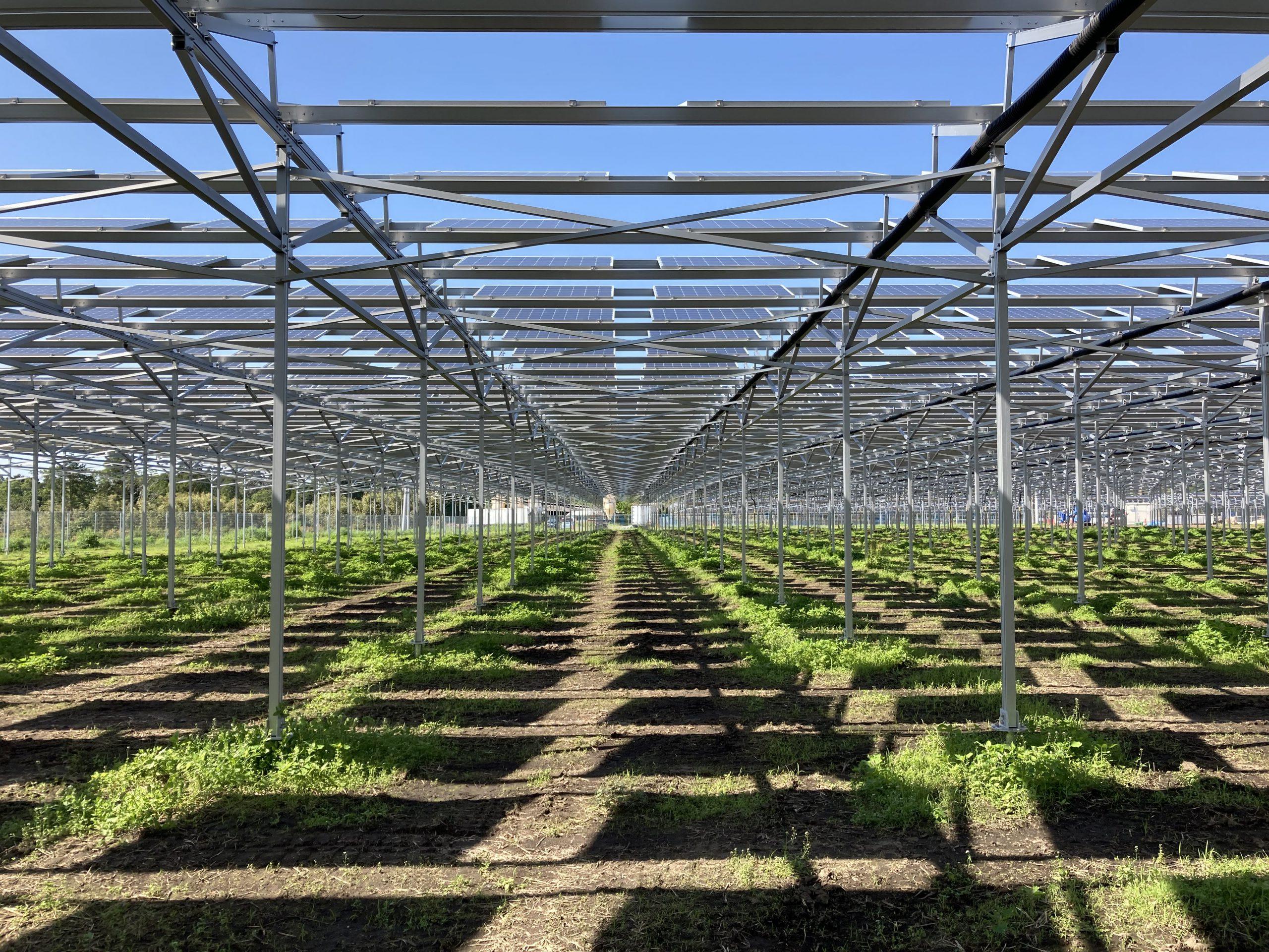 自然電力開発のソーラーシェアリング案件が鹿児島県にて完工